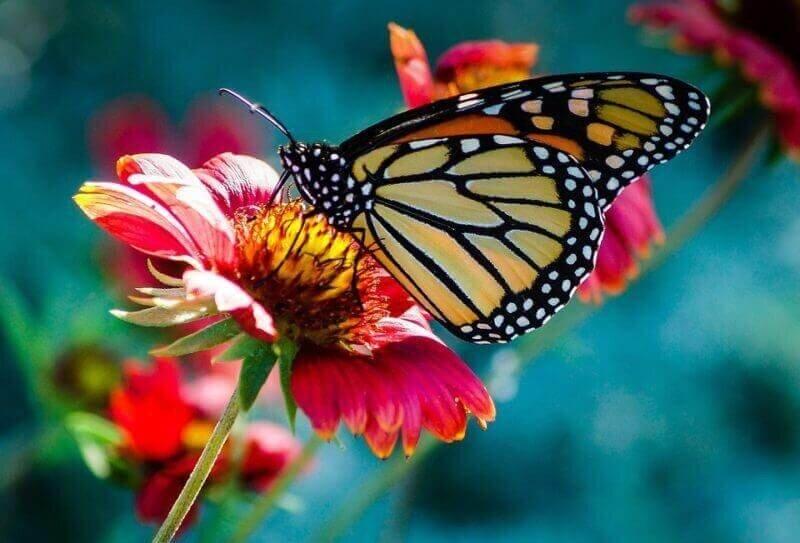 Kelebek Gümüşhane